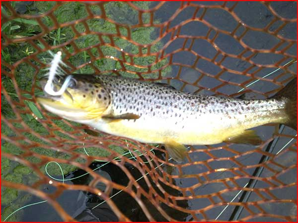 Brookville tailwater trout fishing for Brookville lake fishing report